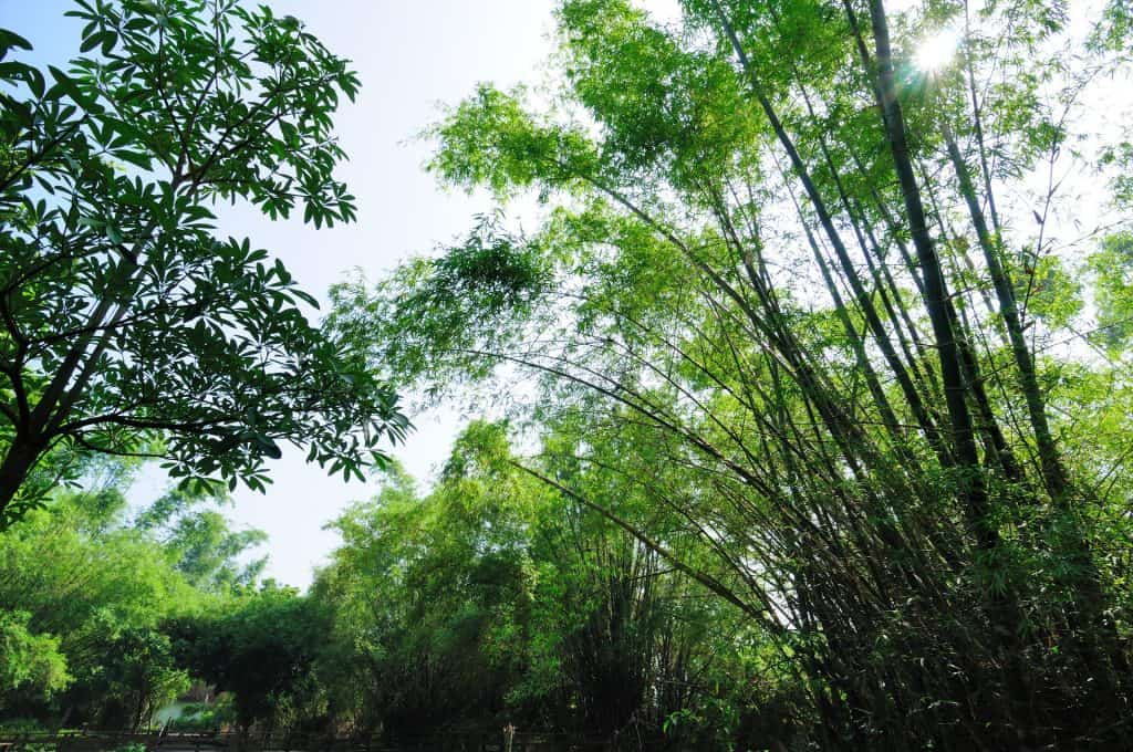 鬧中取靜,小琉球碧雲寺竹林生態池 bamboo forest ecological pool in liuqiu of pingtung 06 1 1024x680