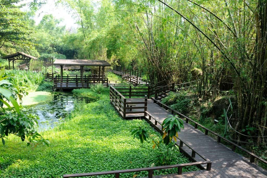 鬧中取靜,小琉球碧雲寺竹林生態池 bamboo forest ecological pool in liuqiu of pingtung 16 1024x683